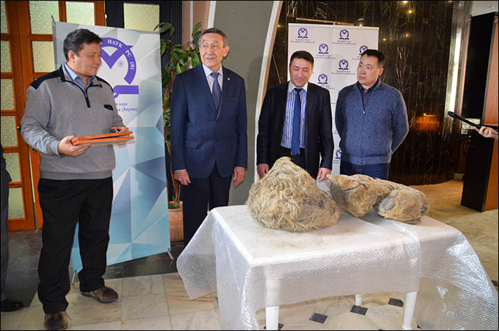 First pictures of remains at least 10,000 years old  found in Siberia's Sakha Republic