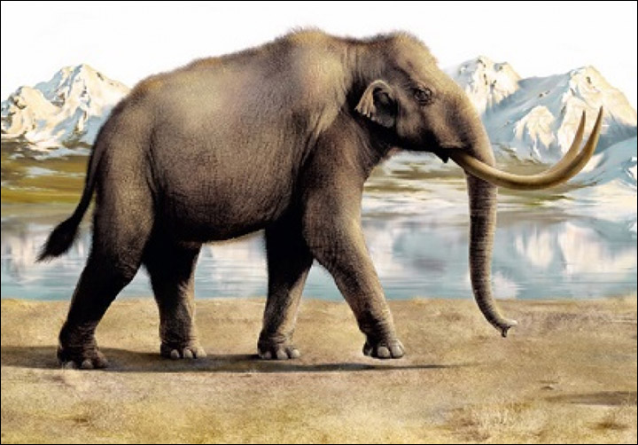 the extinct animals research woolly mammoth Much like the extinct woolly rhino, the buried bones and bodies of woolly mammoths is something researchers and archaeologists have come across many times, specifically near the mammoths final destination, the arctic.