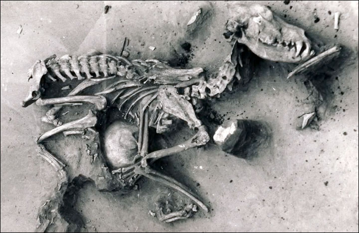 A study of the remains of dogs in an ancient cemetery near Lake Baikal has shown how the animals were 'treated just like people when they died'