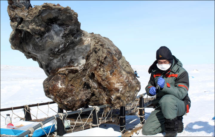 EXCLUSIVE: Siberian scientists announce they now have a 'high chance' to clone the extinct woolly mammoth