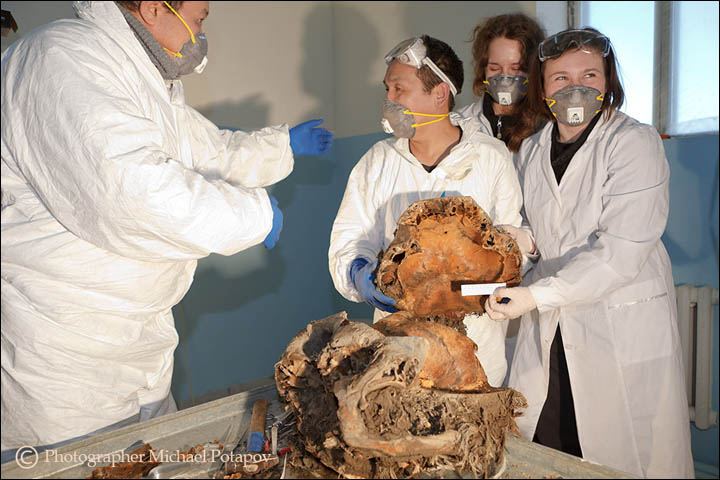 39,000 year old mammoth brain autopsy