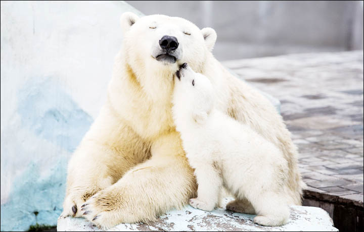 Vera's Stunning Images Of Polar Bears Set To Feature On