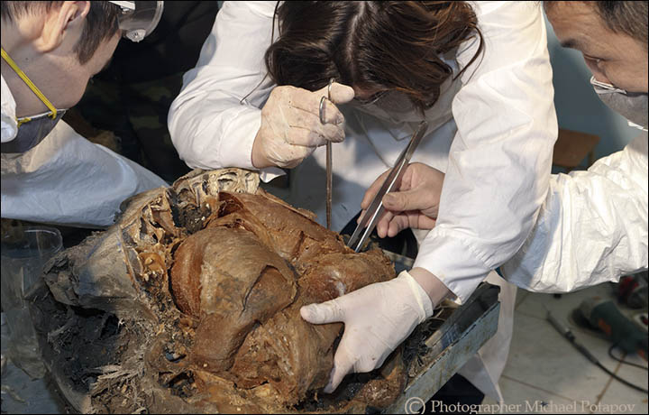 The brain of Yuka was very well preserved, and we could compare it to the brain of an African elephant