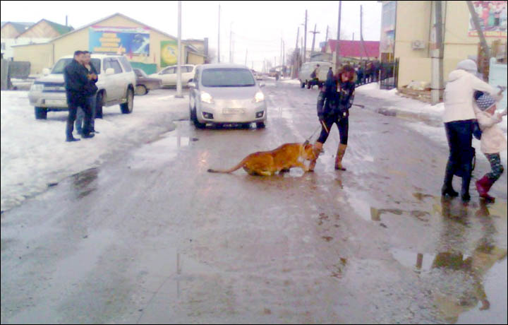 Girl Walked On A Leash Like A Dog
