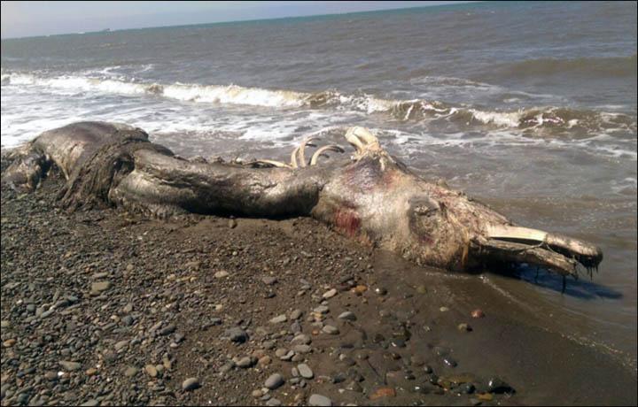 Monstruo marino ' Information_items_3172