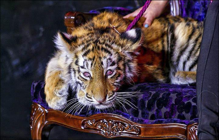 Don Lichterman: Animal Cruelty & Animal Crime Weekly Report