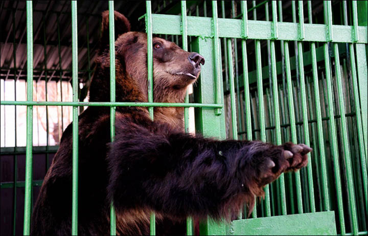 it is cruel to keep animals in cages