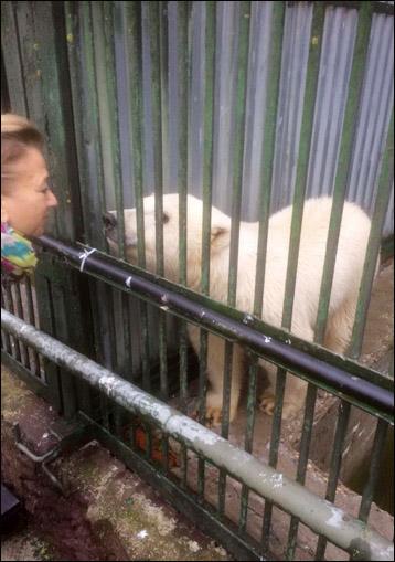 Bear in zoo