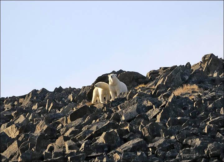 Polar bars on Cape Kozhevnikov