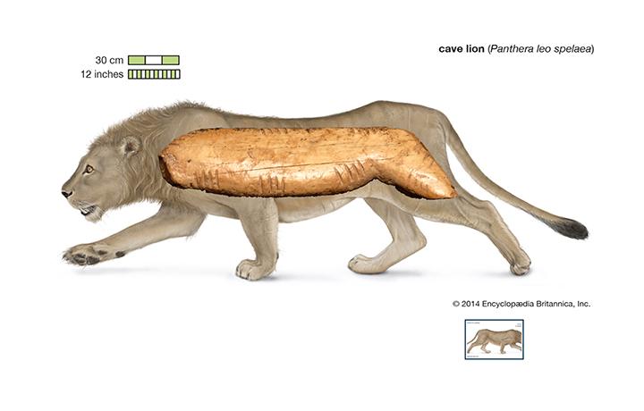 Figurilla de un león de las cavernas sobre marfil de mamut recuperada en Cueva Denisova (Siberia). Foto: Institute of Archeology and Ethnography.