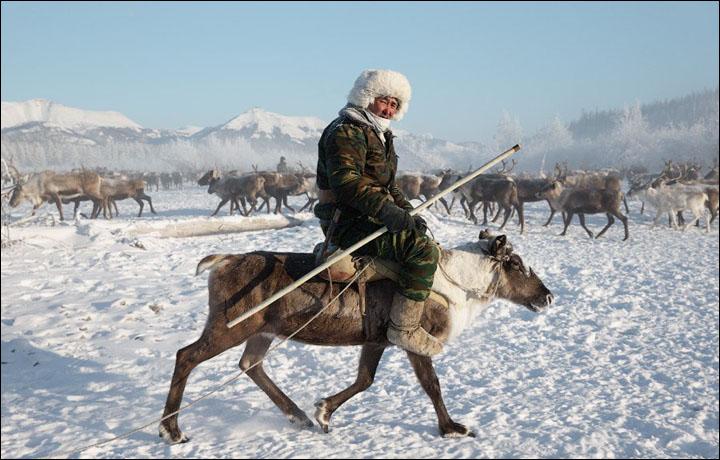 Risultati immagini per Russian Arctic reindeer death